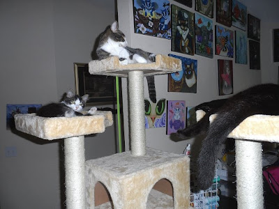 Anakin, Trixie & George sleep on the cat condo