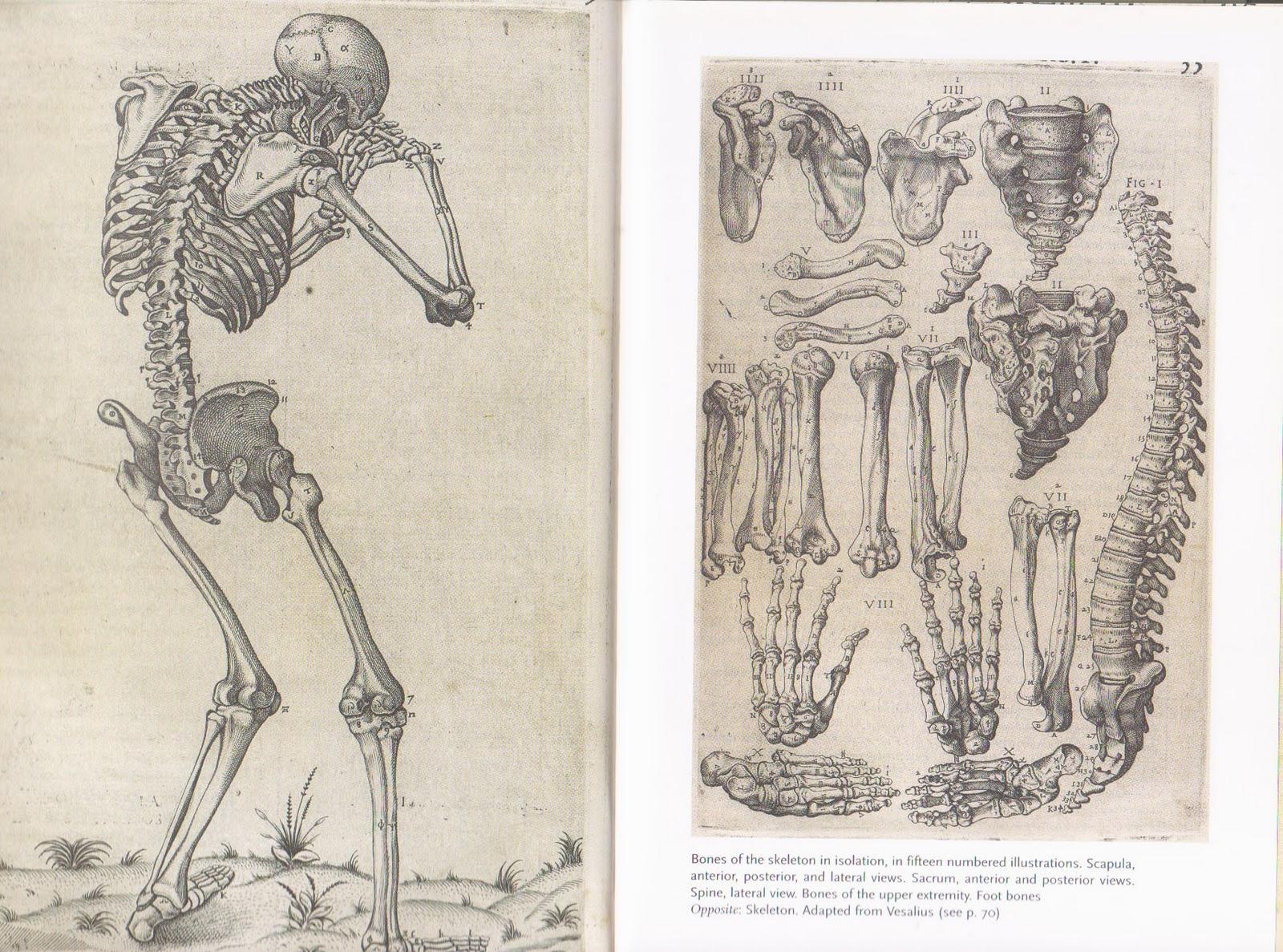 http://3.bp.blogspot.com/-2h4xAEGTcRo/TVgzlANNXpI/AAAAAAAAALo/l-nc2Fhm8z8/s1600/Human+Anatomy.3.jpg