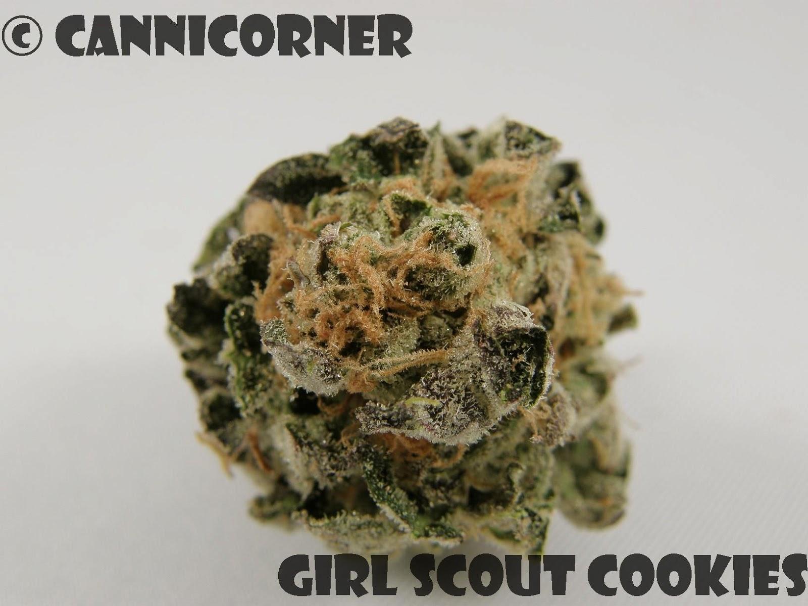cannicorner girl scout cookies og kush x durban poison x
