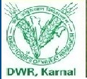 DWR Recruitment Directorate of Wheat Research 2017-2018 for JRF, SRF, Technical Helper, Assistant
