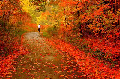 Infinitas hojas naranjas en el paisaje Fotografias de otoño