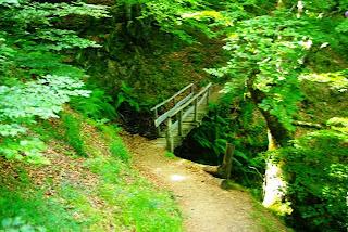 Caso, ruta a la cascada del Mongayu, bosque del monte Saperu, puente