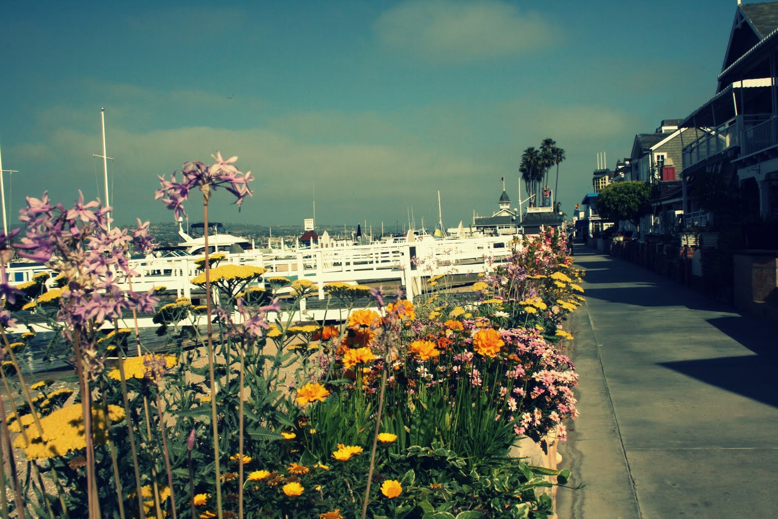 Vintage Pretty California Sunshine