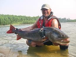 Notícias - Os 10 maiores peixes de água doce do mundo 10-+salmao+siberiano
