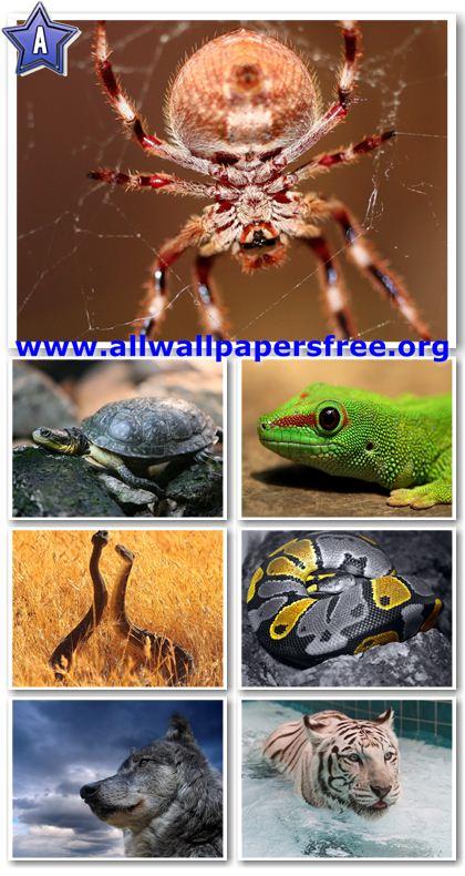 25 Amazing Animals Wallpapers 1280 X 1024