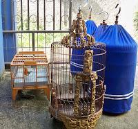 Rutinitas adalaah kuncu utama merawat burung