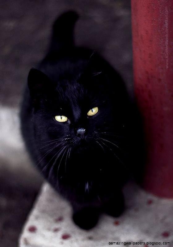 black cat cute animal street