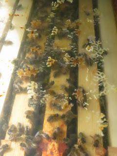Artificial swarm in nuc box