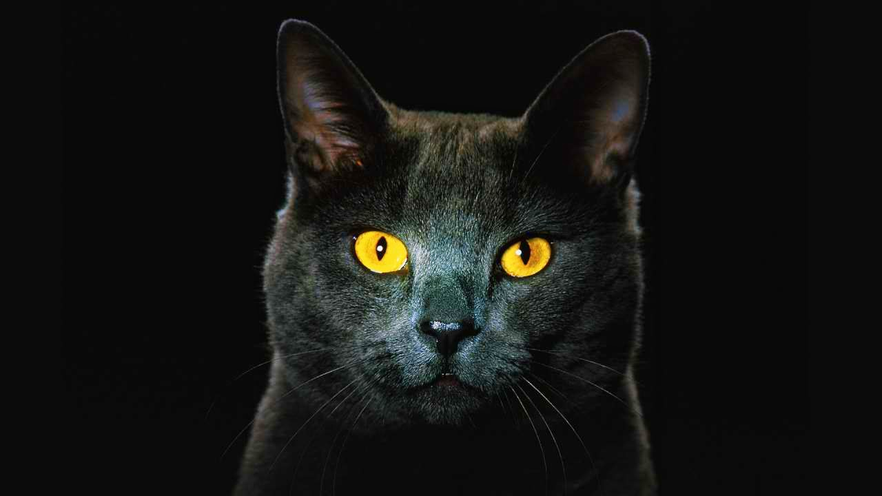 Cats can see in the dark