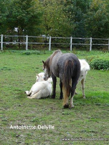 mon cheval me dit les jumeaux chez les chevaux. Black Bedroom Furniture Sets. Home Design Ideas