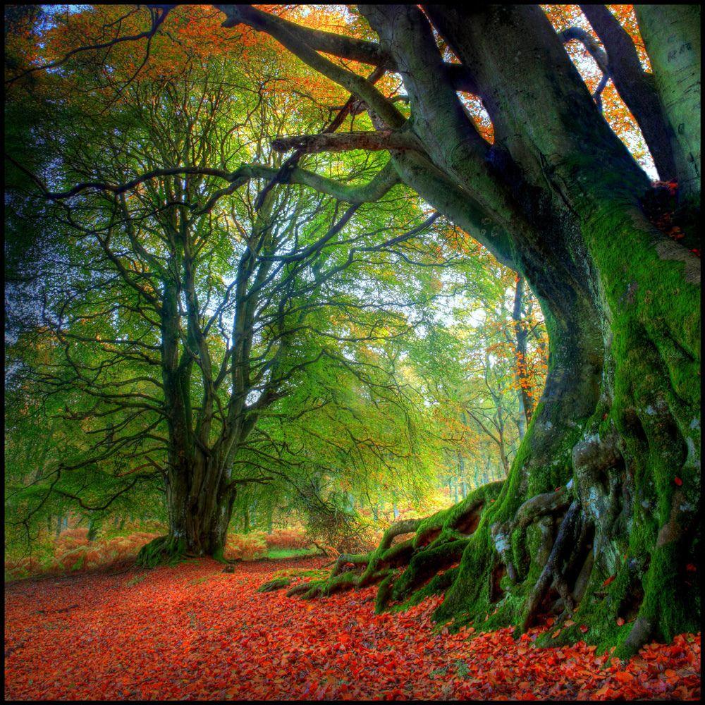 32. Sun Shining in Fall by Scott Prokop