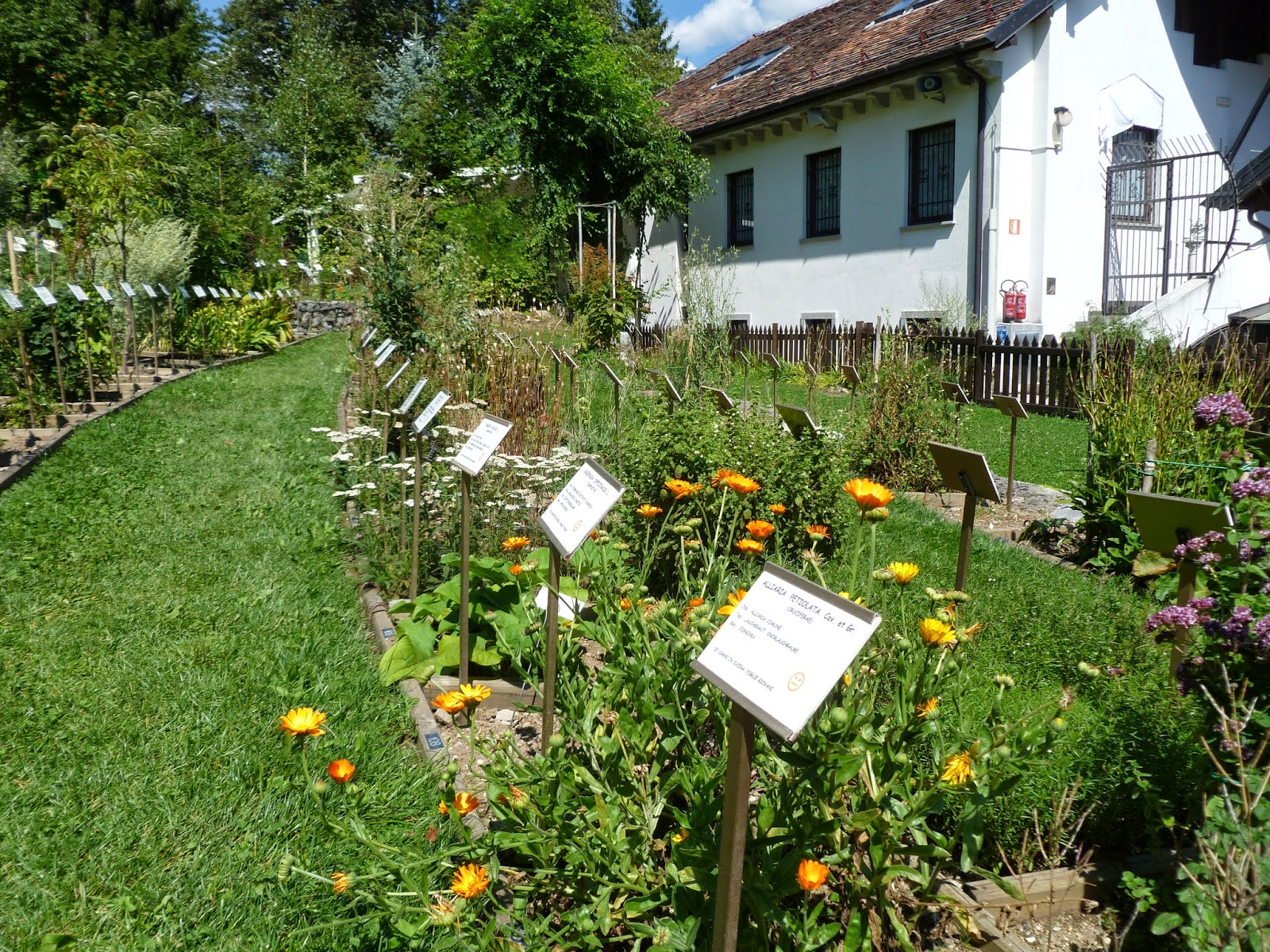 Giardini botanici alpini e dei semplici giardino dei for M innamorai giardino dei semplici accordi