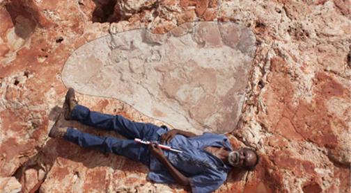World's largest dinosaur footprints discovered in Western Australia