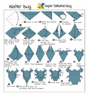 Water bug Diagram