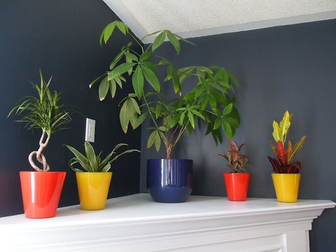#2 Indoor Plant Decoration Ideas