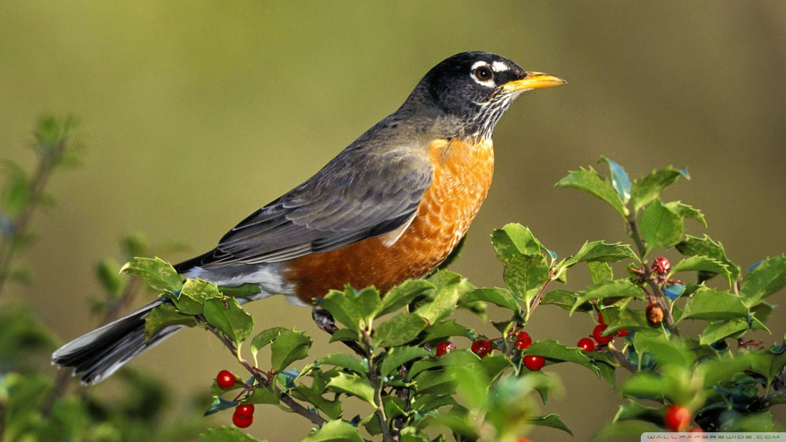 animals amp birds wallpapers in high resolution hd