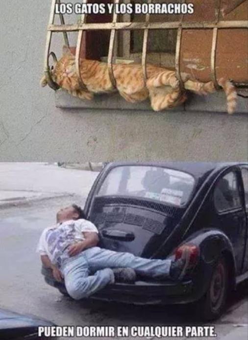 Los gatos y los borrachos pueden dormir en cualquier parte, aquí la prueba.