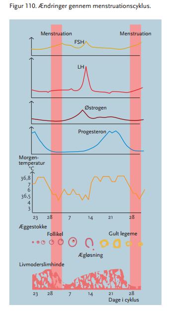 menstruationscyklus