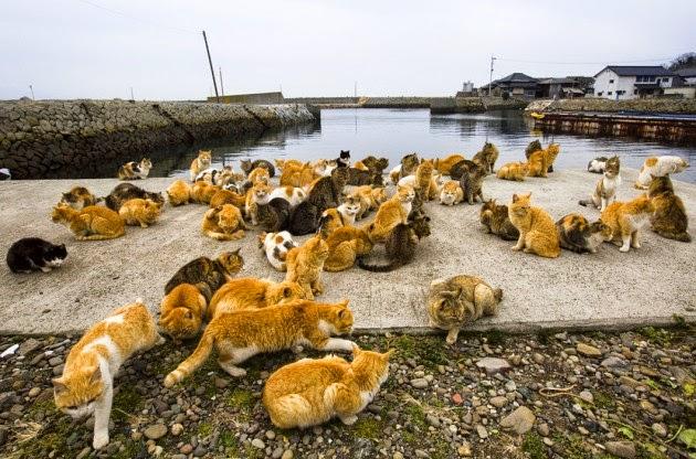Grande quantidades de gatas