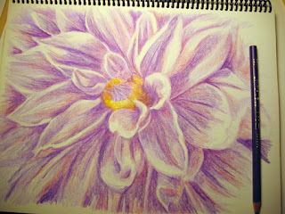 Work in Progress photo of a Color Pencil Drawing of a Dahlia Flower