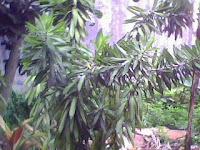 tanamanhiaszens.blogspot.com