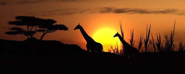 Sabine & Ide -  Southern Africa 2011