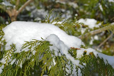 #christmascountdown  snow in the cedars https://www.etsy.com/shop/JeannieGrayKnits