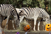 . help enrich the lives of the Zoo's animals, promote natural behaviors, .