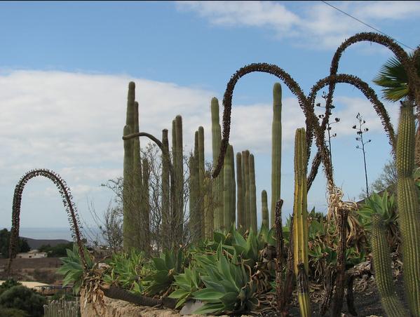 Eiland tenerife de natuur op tenerife for Botanische tuin tenerife