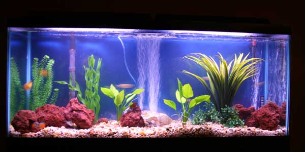 Fresh Water Fishes For Aquarium