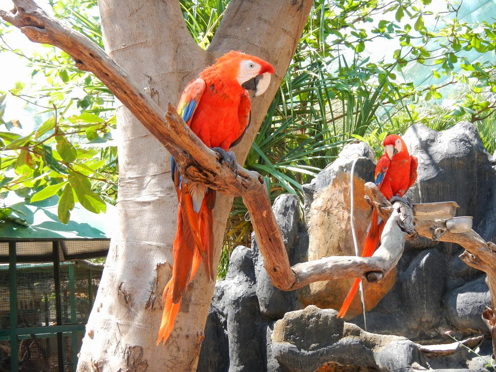 bird park, wisata di gili meno, gili meno lombok, tempat wisata di lombok, wisata lombok
