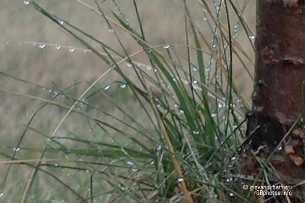 Macro fotografia con la Fuji X20 di fili d'erba con gocce di pioggia
