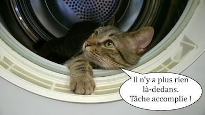 Un chat dans un sèche-linge.