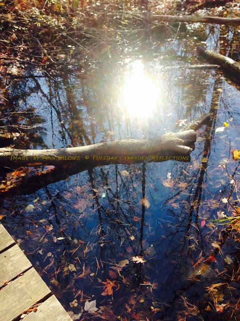 Tuesday's garden reflections