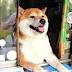 Αυτός είναι ο σκύλος-περιπτεράς που έχει ξετρελάνει τους πάντες... [video]