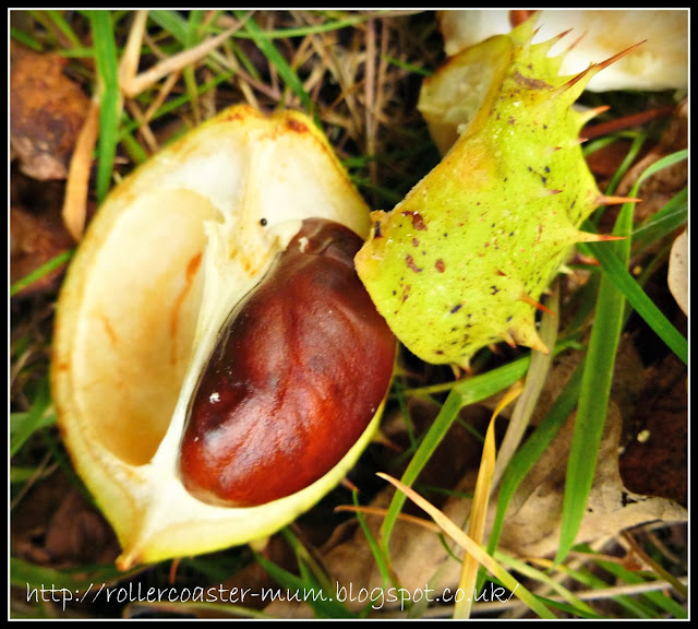 autumn conker collecting