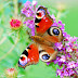Colourful Butterfly in Flower Wallpaper
