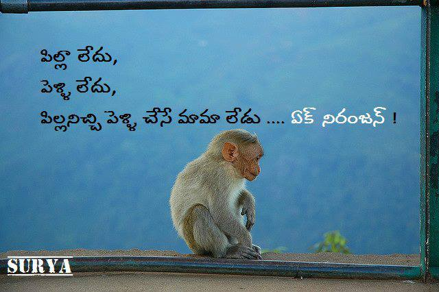 Funny monkey quotes telugu quotes wallpapers