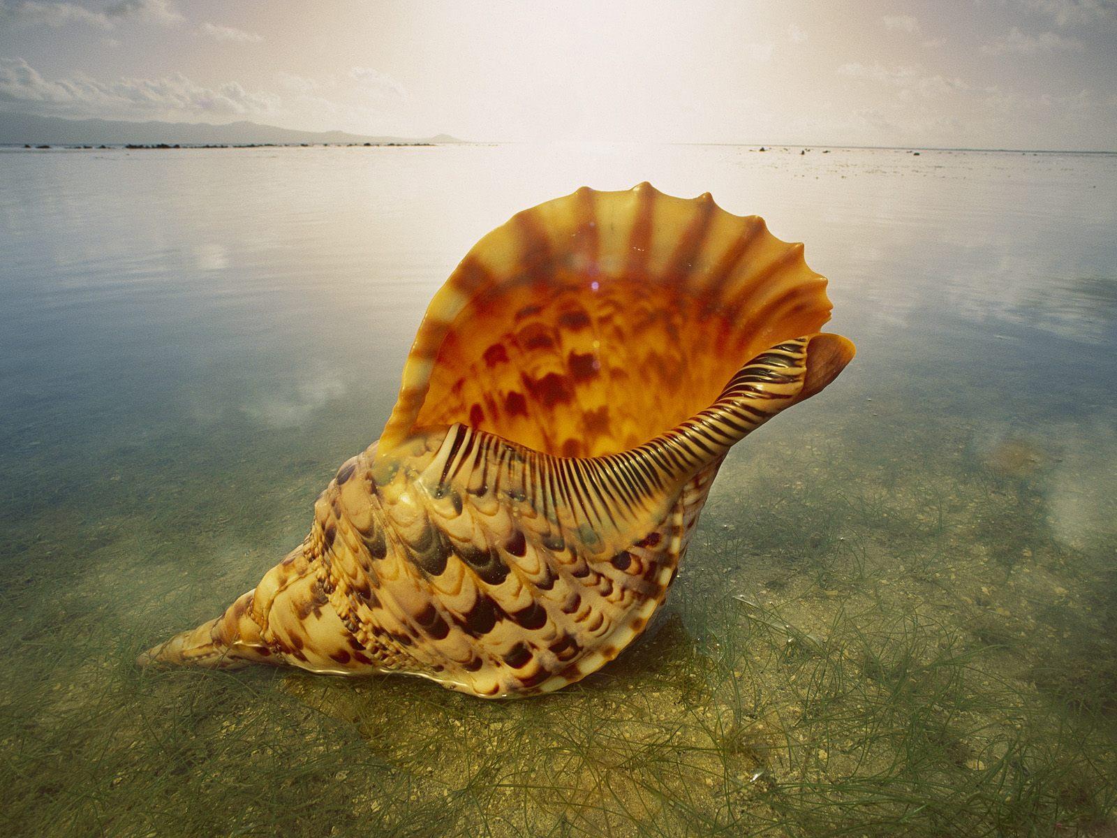 http://3.bp.blogspot.com/-2l9oUkYczdc/TkrTWhrRC9I/AAAAAAAALlE/n9gch2wGzrU/s1600/Underwater+Wallpapers+%252829%2529.jpg