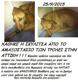Χάθηκε καφέ σκυλίτσα από το αμαξιστάσιο των τρόλεϊ στην Αττική