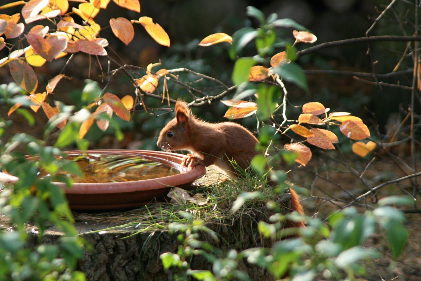 Pension für Eichhörnchen
