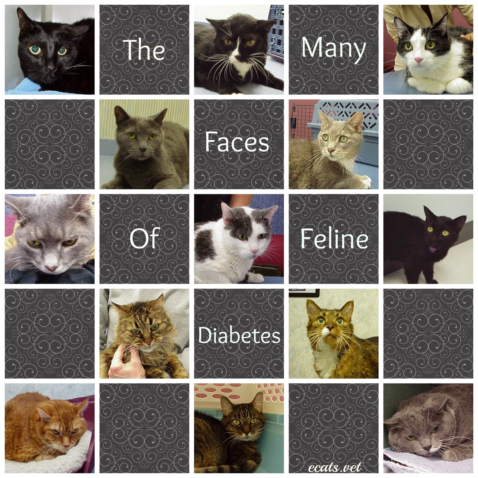 Exclusively Cats Veterinary Hospital Blog Diabetes And
