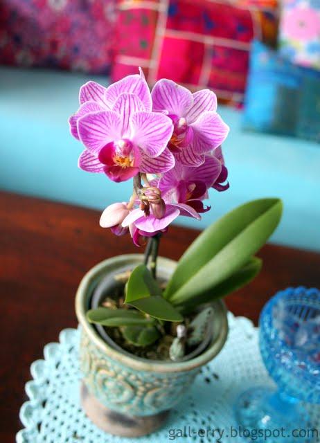 Älskar orkidéer