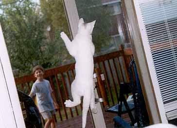 kitten climbing up a screen door