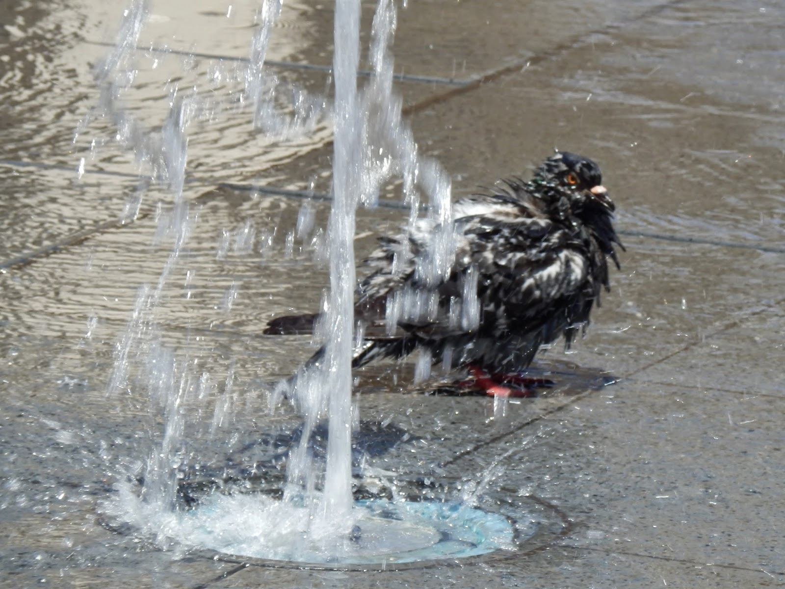 A bird taking a shower
