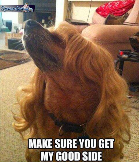funny dog wig picture