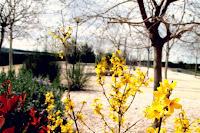 Más primavera.