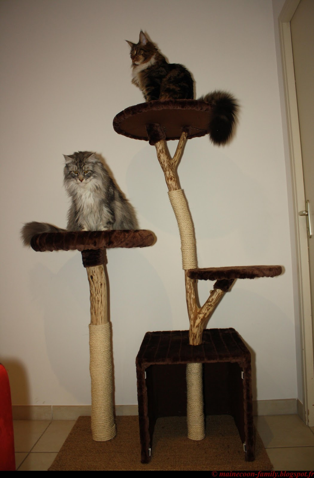 Vends arbre chat en bois naturel - Arbre a chat bois naturel ...