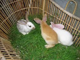hal yang harus diperhatikan ketika memelihara kelinci