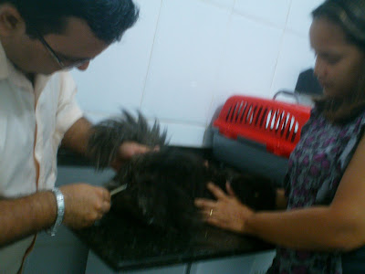 Tio Neto medindo a temperatura da gata Dodó, da Renata Góes